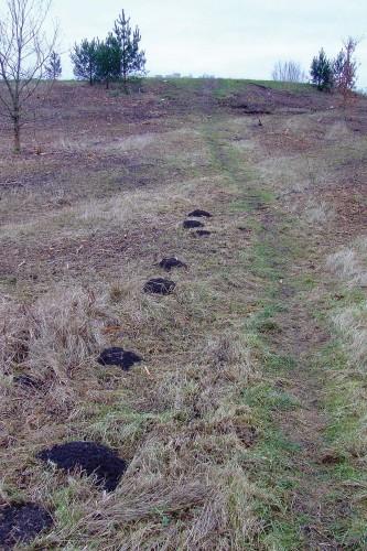 Friske muldvarpeskud (januar 2009)
