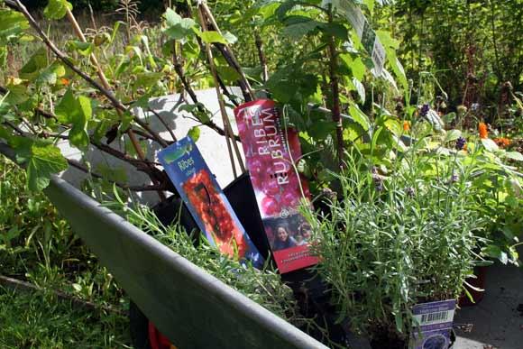 Her er bærbuske og duftplanter klar til arbejdsdagen