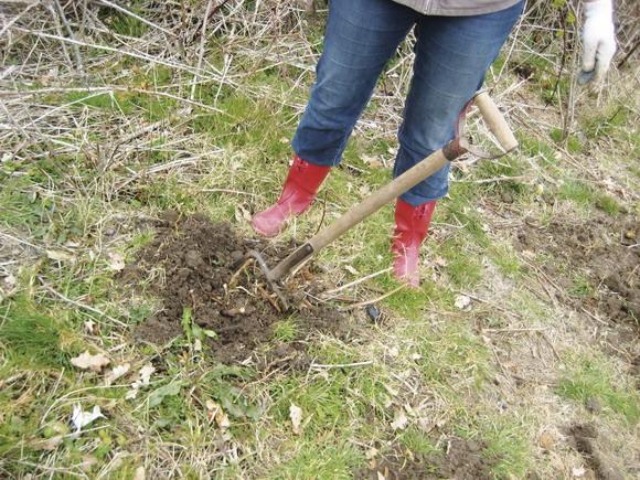En afdelingsformand rydder op. Toveshøj formand, Anett S. Christiansen vandt kampen mod brombærbuskenes rødder.