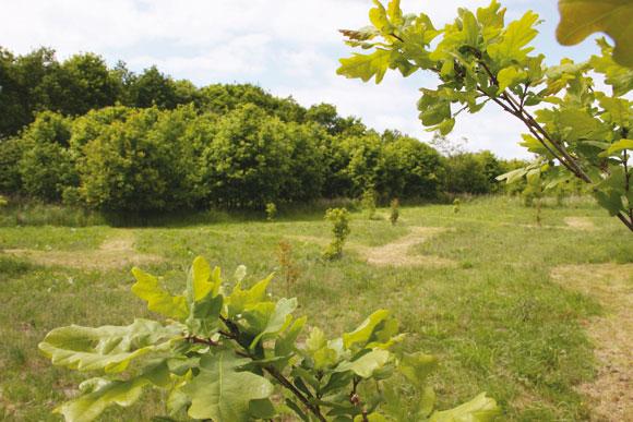 Ny krolfbane i grønne omgivelser i Hasle Bakker