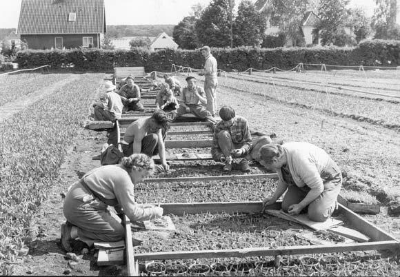 Hejndorfs Gartneri 1958