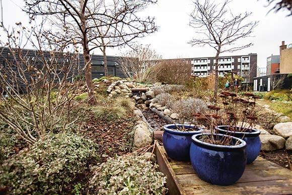 """Haveanlægget med """"Lund-bækken"""" og de vintergrå stenbedsplanter."""