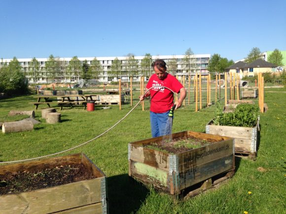 Et kik fra de mobile bede, hvor der just er kommet vand. Det man ser i baggrunden er ikke en hønsegård, men et trådhegn i en labyrint for børn. Der skal vokse planter op ad hegnet.