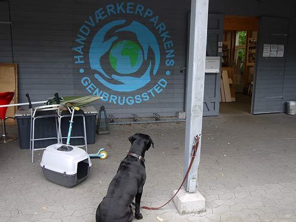 Hund venter på sin ejer, der er inde og se på genbrugsguld