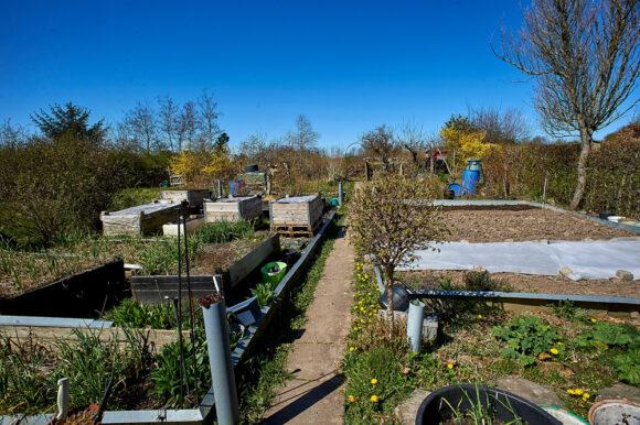 Der bliver dyrket alle mulige afgrøder i haverne.