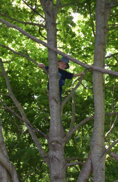 Der bliver også kravlet i træer.