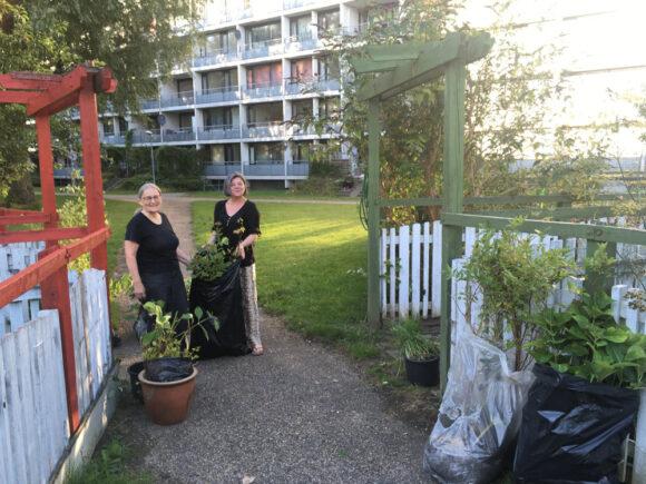 I Gellerup er Grønærtens havelejere glade for de mange planter, som Jette Hyttel snart kan kigge ned på fra sin altan i genhusningslejligheden på Gudrunsvej.