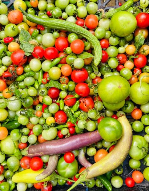 Foreningen Verdenshavernes Venner og beboere har sammen dyrket tomater og squash i polytunneler på Toveshøj.