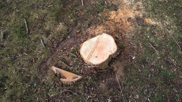 Der skal et træhovede til at se, at dette træ var sygt.